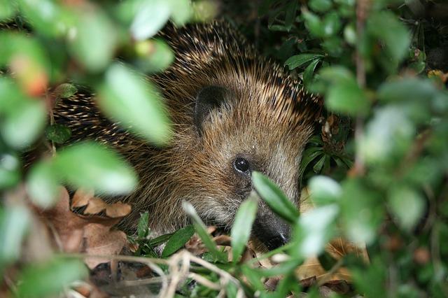 Hidden hedgehog